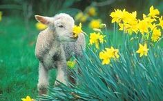 Blessings be upon the Lamb. From My French Country Home blog.