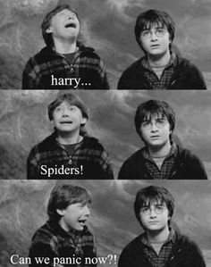 Harry.....spiders.