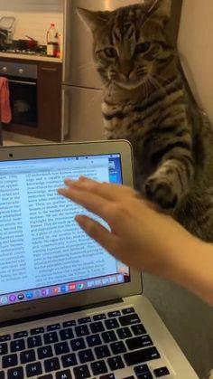 Animal Jokes, Funny Animal Memes, Funny Animal Pictures, Cat Memes, Funny Cute Cats, Cute Funny Animals, Cute Baby Animals, Funny Dogs, Wild Animals