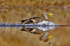 Foto Naturaleza - el primer sitio Web en Chile de Fotografía Natural