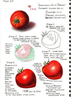Tomato from Life, Derwent Coloursoft tutorial - WetCanvas