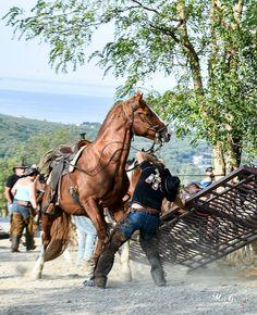 Horses, Photography, Animals, Photograph, Animales, Animaux, Fotografie, Photoshoot, Animal