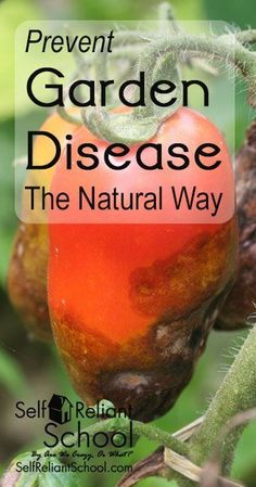 How to prevent garden disease by practicing natural crop rotation. #beselfreliant: