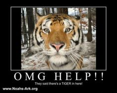 Mr. Smith - OMG HELP!! They said there's a tiger in here!   #MrSmith #Tiger #NoahsArk    www.noahs-ark.org
