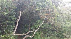 Nature mauricia