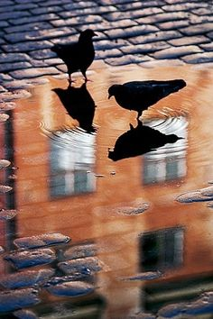 Reflections by concetta  What could be more ubiquitous than the urban pigeon?