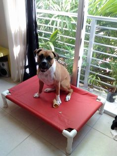 Diy raised dog bed made from pvc pipe and outdoor fabric the myles raised dog cot 22x30 dog bed small dog bed pet bed medium bed outdoor dog bed 11 mesh colors 15 canvas colors dogs up to 80 pounds solutioingenieria Image collections