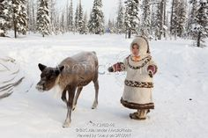 Image of 3 year old khanty girl, angelina ozelova, playing outside with a pet reindeer at a khanty reindeer herder's winter camp. shuryshkarsky region, yamal, nw siberia, russia by ArcticPhoto