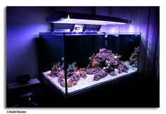 how to build a saltwater reefscape **********
