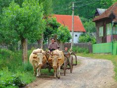City People, People Of The World, Best Memories, Country Life, Cattle, Hungary, Romania, Past, Beautiful Places