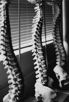 chiropractic art