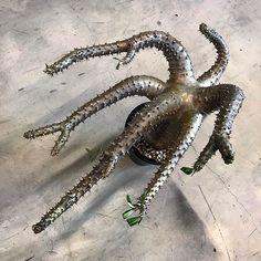 WEBSTA @ sin_takizawa - It looks just like KRAKEN.#Pachypodium #notmakayense#krakenplants #plantsanddestroy