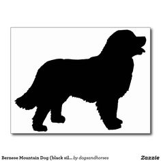 Bernese Mountain Dog (black silhouette) Postcard