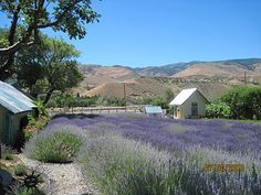 Lavender Ridge, Reno, Nevada