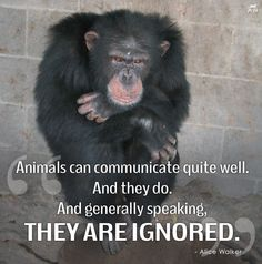 It is so easy for humans to think that those who don't use their language cannot express themselves... We sometimes tend to do it with people who don't speak a language we know. Imagine what we do with animals... So many of us still consider them like animated things that can't even feel. When will we wake up?
