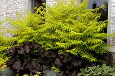 designing with Rhus copallina - Google Search