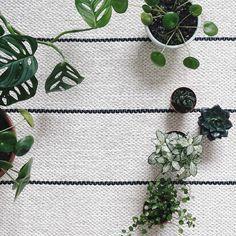 P L A N T gang . Sonntage...  Und bei allem was ich hier momentan in die Hände nehme stellt sich die Frage: Mitnehmen ins neue Zuhause oder nicht? Was wäre der neue Bestimmungsort? Lieber doch verkaufen/ verschenken? Einen schönen Tag wünsche ich euch! . . #urbanjunglebloggers #plants #myplants #gogreen #fromabove #fromwhereistand #carpet #teppich #inmykitchen #living #interior_and_living #interior #interioraddicted #interiorlove #interiør #interior_magasinet #interiordesign #homedecor…