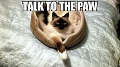 Talk to the Paw Funny Cat Meme #cats #catmeme #meme #funnycatmeme
