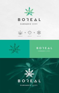 Logo design presentation - Identity and Packaging Design Concepts for Boreal Cannabis Natural Tea – Logo design presentation Cannabis, Presentation Logo, Logo Branding, Best Logo Fonts, Inspiration Logo Design, Tea Logo, Web Design Company, Brand Design, Company Logo