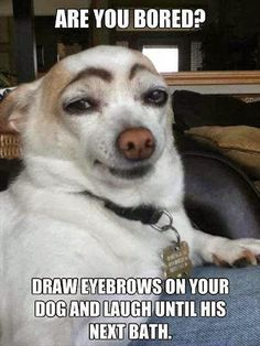 Are you bored? Draw eyebrows on your dog and laugh until his next bath.