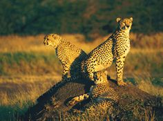 International Expeditions kenya and tanzania safari