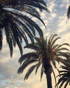Photo: Haley Jean Marie California, Explore, Plants, Plant, Planets, Exploring