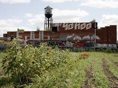 Great article about Urban Farming in Detroit! This image: the Detroit Market Garden, one of the Greening of Detroit's biggest projects, grows produce that's sold next door at Eastern Market.