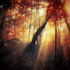 gravity of light :: Ildiko Neer