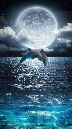 Dolphins jumping wallpaper by - 47 - Free on ZEDGE™ Wallpaper Nature Flowers, Wallpaper Earth, Beautiful Landscape Wallpaper, Scenery Wallpaper, Beautiful Landscapes, Beautiful Nature Pictures, Beautiful Nature Scenes, Cool Pictures, Cute Galaxy Wallpaper