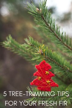 Tips for having a real Christmas tree. Tree trimming tips for fresh trees. MomTrends.com #christmastree #holiday