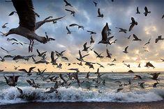 Murmurations: Amazing Bird Photography by Alan MacKenzie