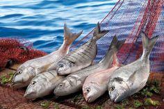 Balıkçılık ve su ürünleri Ceviche, Seafood Recipes, Food Porn, Meat, Beverage, Delish, Cruise, Android, Tasty