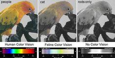 cat-color-vision.jpg (807×408)