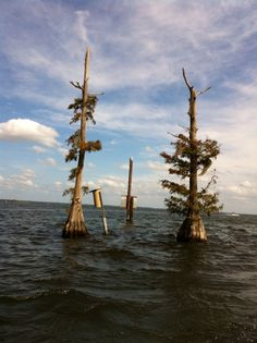 MT Dora Florida Attractions | Mt. DORA has an Art Show in Feb. Photographer took this picture when ...