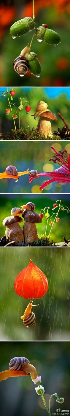 These photos are awesome! Love the lighting and the way the photographer captured these delicate little creatures is just priceless.