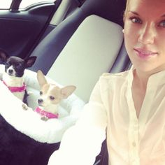 Sofia, Emma (chihuahuas), and Mako. The Buttons. http://the-buttons.tumblr.com