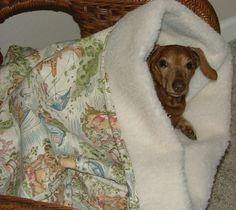 snuggle bag beds for dachshunds-too cute!