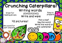 This activity is a great addition to your literacy groups. Students choose a card and look at the picture on the leaf. They say the word, sound it out and write the word onto the caterpillar. One sound goes into each part of the caterpillar, helping students realise if they have missed a sound.