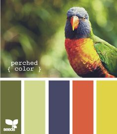 perched color palette (choose blue / red details after birth) Colour Pallette, Color Palate, Colour Schemes, Color Combos, Paleta Pantone, Funny Commercials, Funny Ads, Funny Pranks, Funny Images