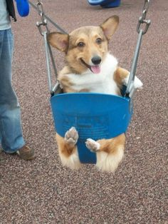 if only Wags could fit in a swing @Elaine Lavelle