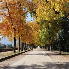 #lucca #autumn #tuscany
