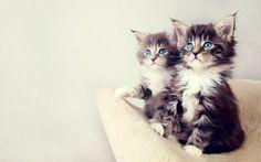 Amazing Animal Photos