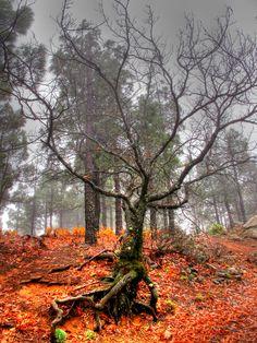 """Otoño"" Gran Canaria Tenerife, Rioja Spain, Places In Spain, Lake Mountain, Hidden Places, Natural Park, Canario, Tuscany Italy, La Gomera"