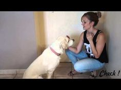 YouTube Dog Training, Dresser, Bindi, Mystic, Dogs, Advice, Girls, Youtube, Dog Ramp
