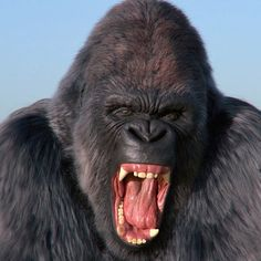 Silverback Gorilla, King Kong, 3d Animation, 2d, Monkey, Tattoo Ideas, Wildlife, Nature, Artwork