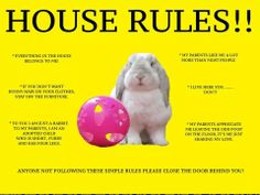 House rules for rabbits