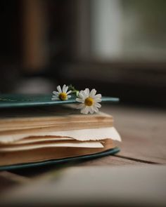 Ana Rosa Ana Rosa The post Ana Rosa appeared first on Fotografie. Book Photography, Creative Photography, Guitar Photography, Macro Photography, Photos Amoureux, Book Flowers, Book Aesthetic, Coffee And Books, I Love Books