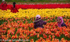 Lisse, Netherlands, Springtime 2014, ©KarolaGrunenbaum