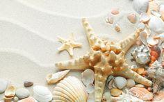 Pix For > Seashells Wallpaper