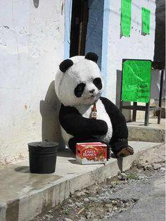 Meanwhile in Mexico Funny Panda Pictures, Panda Images, Panda Love, Love Bear, Image Panda, Top Photos, Panda Drawing, Panda Art, Panda Panda